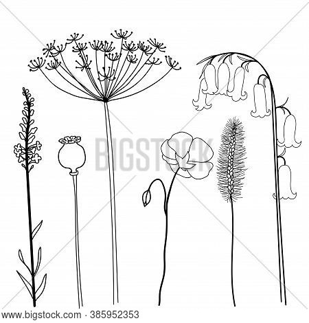 Field Herbs Poppy, Bellflower, Dill, Flax And Stems. Set Of Hand Drawn Vector Illustration Isolated