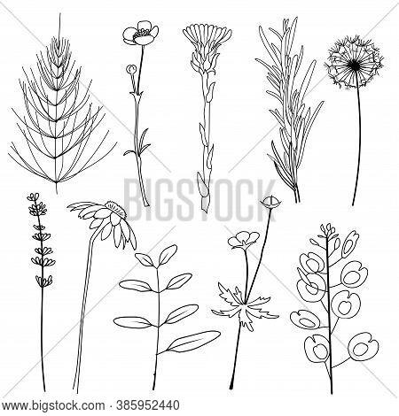 Field Herbs Dandelion, Chamomile, Equisetum, Ranunculus, Paigle, Foalfoot, Pennycress, Lavender, Ros
