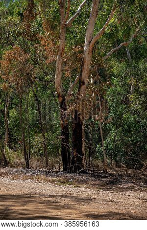 Controlled Burning Of Bushland To Reduce The Hazard Of A Bush Fire