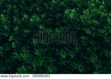 Green Leaf Texture Pattern. Leaf Texture Background. Wall Plant Green. Green Grass Wall Texture For