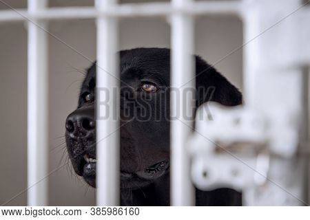 Unhappy And Sad Dog In A Cage. Dog At An Animal Shelter Looks Through A Cage. Dog Behind Bars In An