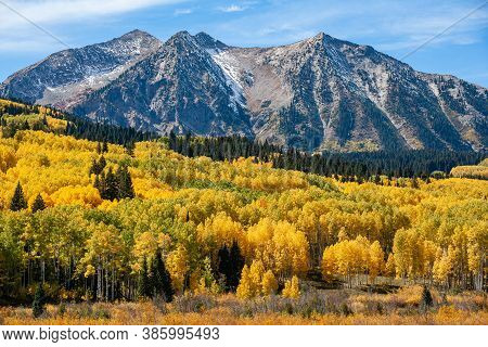 Kebler Pass. Golden Leaves Of Aspen Trees In The Beautiful Rocky Mountains Of Colorado.