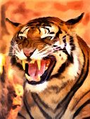 Picture of a Very Angry Growling Tiger Portrait Vector poster