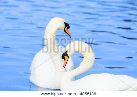 Peaceful Couple