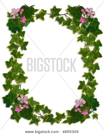 Ivy And Flowering Clover Border