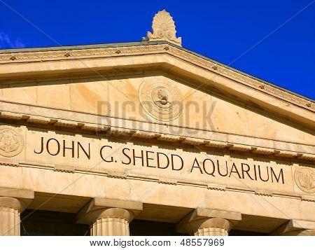 Shedd Aquarium Chicago Illinois