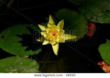 Lotus 2 - Color