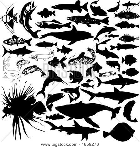 Detailed Vectoral Fish and Sea Animal Silhouettes