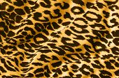 animal print on fabric. leopard, tiger.  look at my gallery for more backgrounds and textures poster