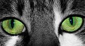 extreme close up of lucky the cat's eyes poster