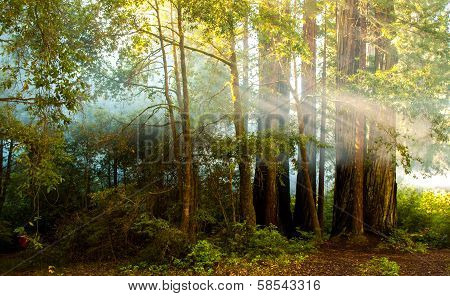 sun ray streaming through forest