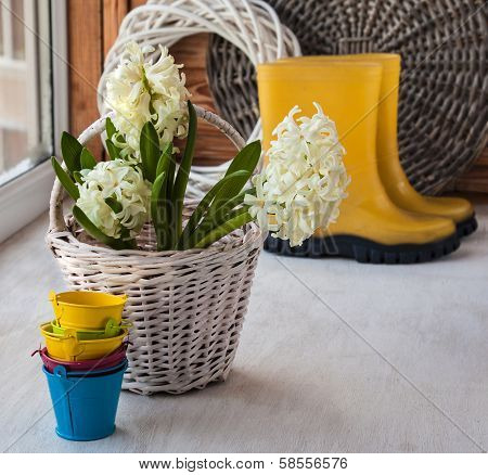 White Hyacinths In A Basket On A Background Of Yellow Gumboots
