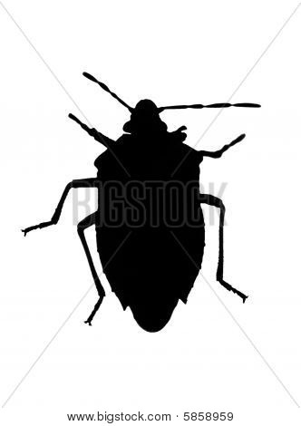 Silhouette Of Bug (chinch)