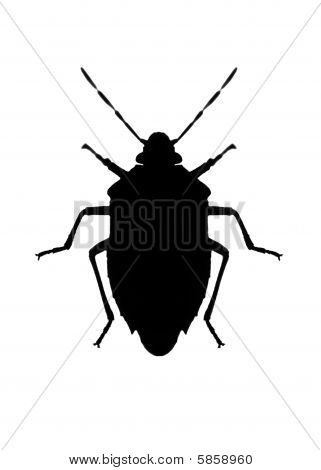 Silhouette Of Bug In Back Lighting