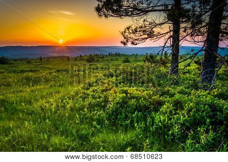 Sunset At Dolly Sods Wilderness, Monongahela National Forest, West Virginia.