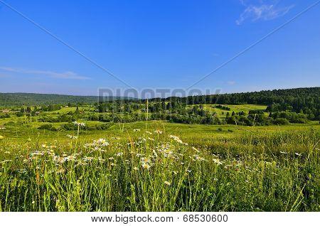 Beautiful Summer Panorama Of Siberian Rural Landscape
