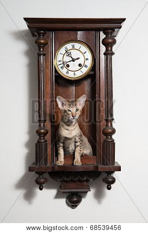 Smart tricky winking kitten sit in the clocks and attentively looking at the audience. Concept of time management, time saving, stop loosing time and steadfastly watching poster
