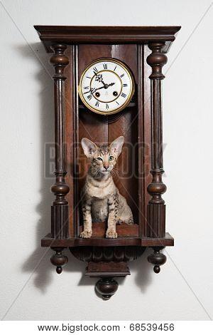 Smart tricky winking kitten sit in the clocks