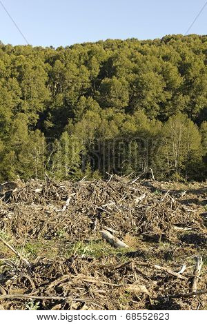 Deforestation in the Chilean Andes. Timber industry is the most important in the country. poster
