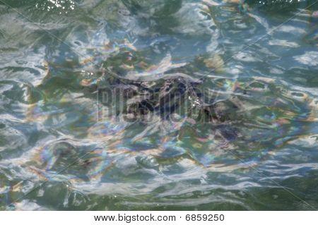 Arizonas Oil In Ocean