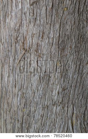 Cypress bark texture clouse up