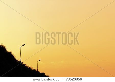 Silhouette lampposts in the dawn sky background