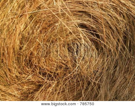 Harvested roll of straw