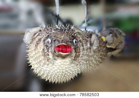 Stuffed Blowfish, puffer fish Selling In Market