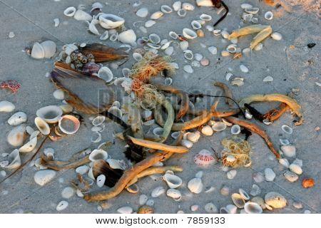 Seashells On Sandy Beach At Dawn Sanibel Florida poster