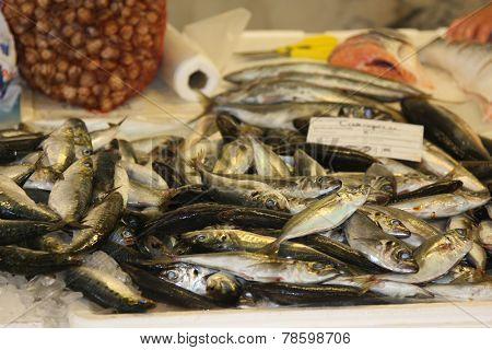 Sardines for Sale