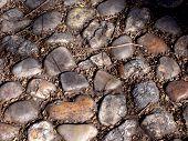 shiny stone path  poster