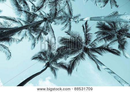 Vintage Image Palms