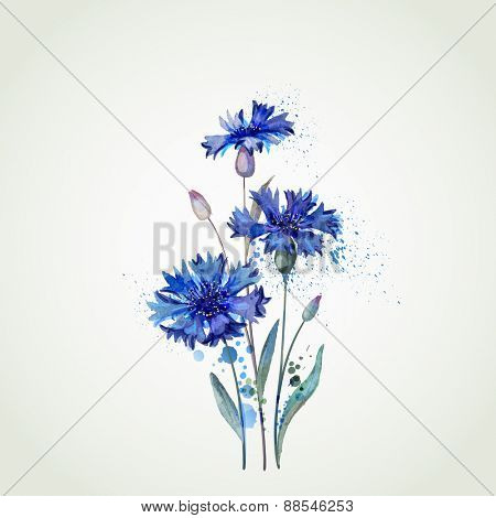 blue cornflowers by watercolor Elements