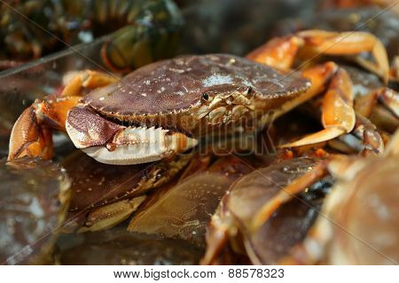 Seafood Market Live Dungeness Crabs