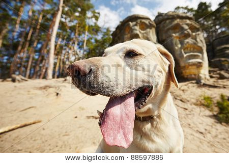 Dog And Devils Heads