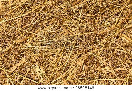 Dry Golden Hay Or Straw Texture As Natural Background