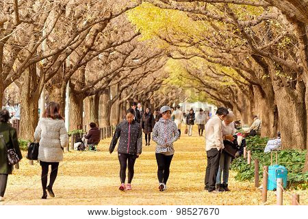 Tokyo, Japan. 10 December 2014 - The Japanese People Walking And Relax At Avenue Of Ginkgo Trees - M