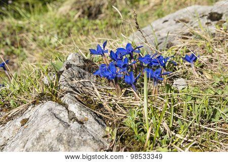 Vivid Blue Flowers