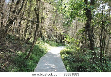 Path on Yew-tree grove