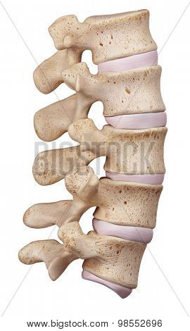 medically accurate illustration of the lumbar spine