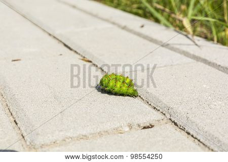 Caterpillar On The Paving Stones