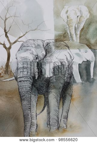Original watercolour, collage of elephants