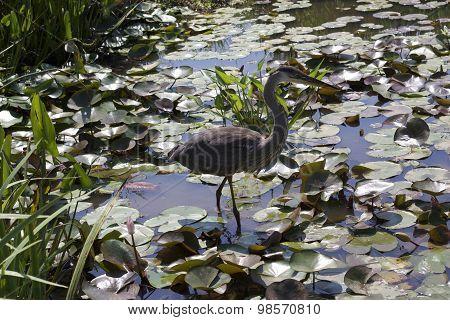 Kenilworth Aquatic Gardens