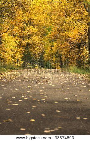 Fall Season Back Road