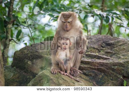 Monkey Baby Monkey Mother