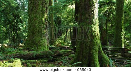 Grand Old Trees
