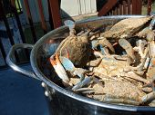 salted live blue crabs from the Chesapeake Bay of Maryland cooking in a pot outdoors poster