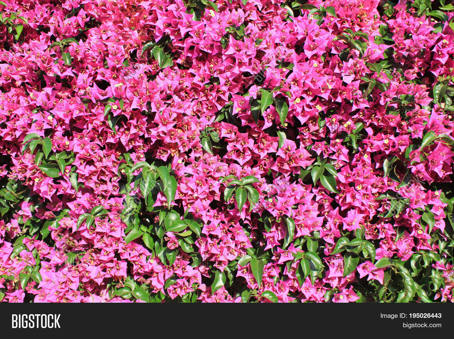 Bright Pink Light Image Photo Free Trial Bigstock