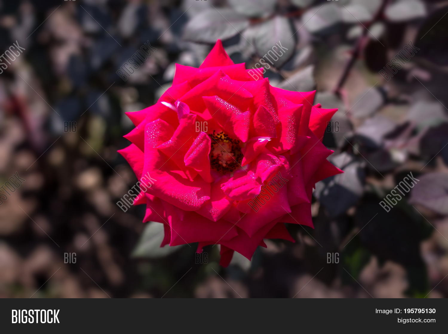 Early Morning Image & Photo (Free Trial) | Bigstock