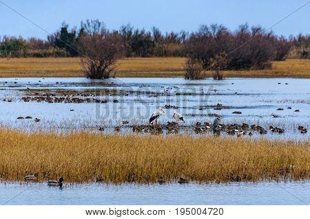 Wetlands In Aiguamolls In Catalonia, Spain